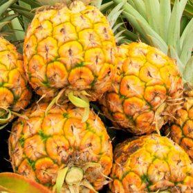 Sunrise Pineapple - Quality Plus Aesthetic International Co., Ltd.