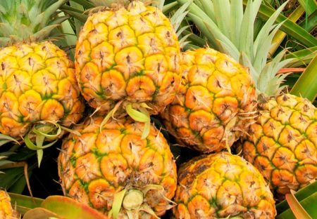 Sunrise Pineapple - Quality Plus Aesthetic International Co., Ltd.