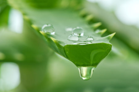 Tropical Aloe Vera - Quality Plus Aesthetic International Co., Ltd.