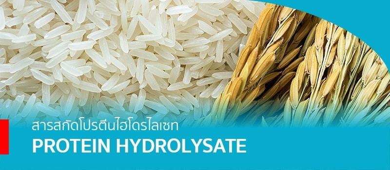 • สารสกัดโปรตีนไฮโดรไลเซท (Protein Hydrolysate) จากข้าวหอมมะลิ