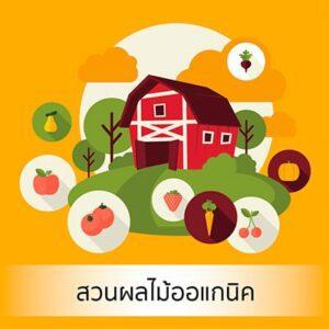 สวนผลไม้ออแกนิค (Organic Farm)
