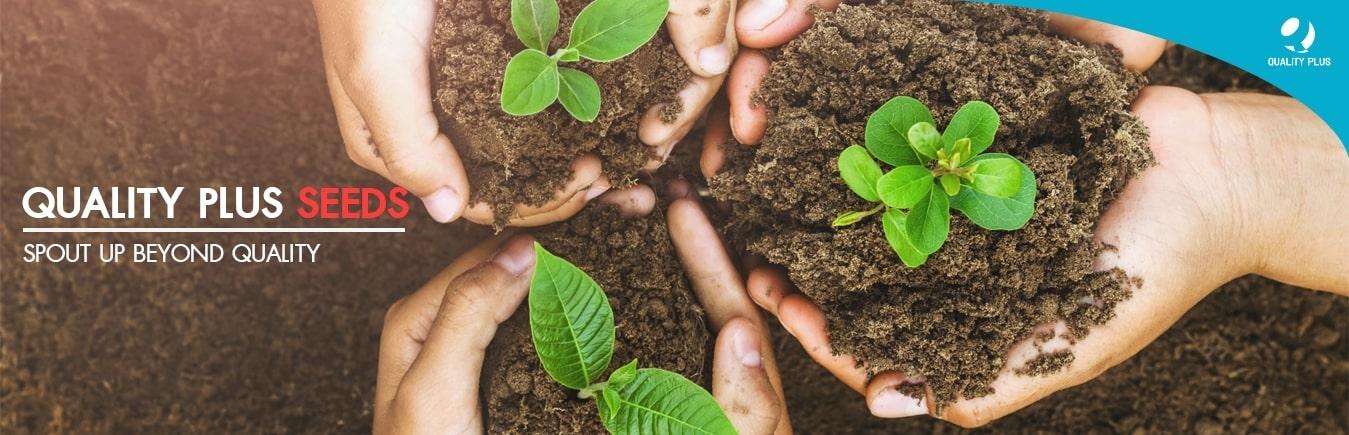 Quality Seeds The Future เมล็ดพันธ์คุณภาพ ต้นกล้าแห่ง