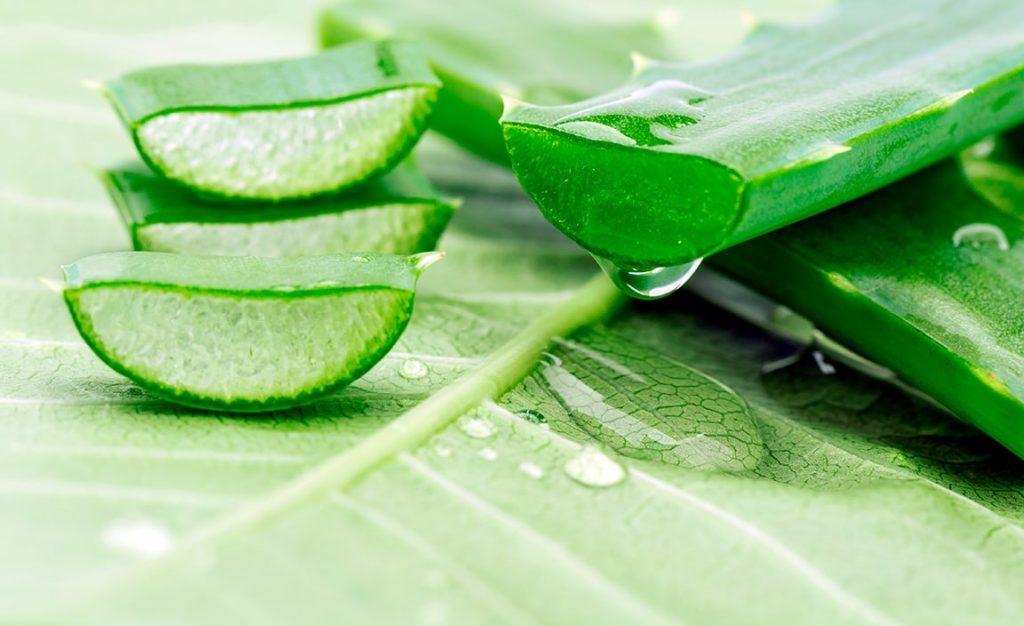 Aloe Barbadensis Leaf Extract สารสกัดจากว่านหางจระเข้