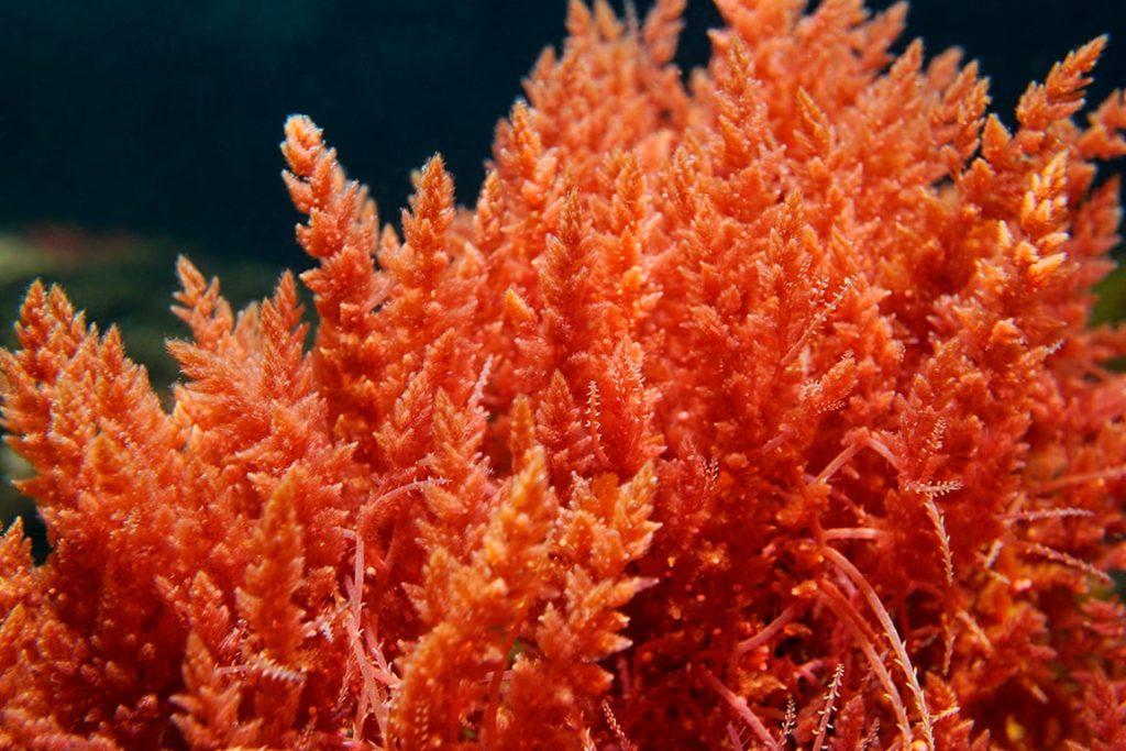 Tego Stemlastin สารสกัดจากสาหร่ายแดงช่วยฟื้นฟูสภาพผิวได้ดี