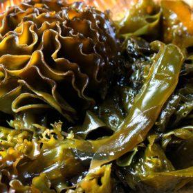 Undaria Pinnatifida Extract สารสกัดจากสาหร่ายวากาเมะ