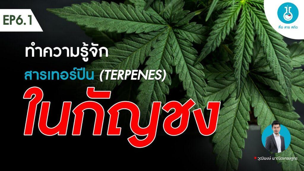 สื่อสารสกัด EP6.1 สารเทอร์ปีน (Terpenes) ในกัญชง